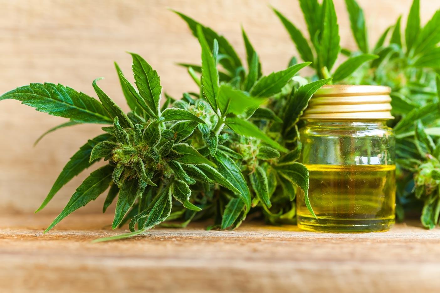 CBD Öl in einem Gefäß steht auf einem Holztisch und neben der Hanfpflanze liegt eine Cannabis - Blüte.