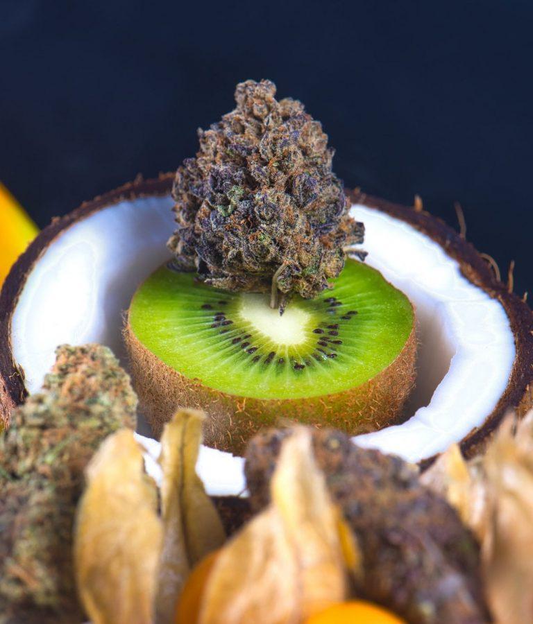 Kokusnuss, Gemüse und weitere Obst-Sorten bilden ein kleines Bettchän für Cannabisblüten. Die Cannabisplanze enthält unter anderem tausende unterschiedlichen Terpenen.